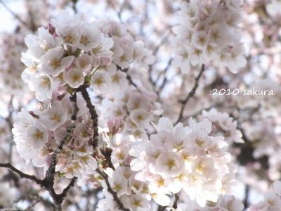 Blogphoto451